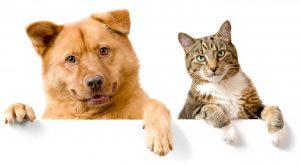 Registro Nacional de Mascotas o Animales de Compañía Ley 21.020